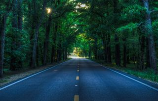 Road in forest free use